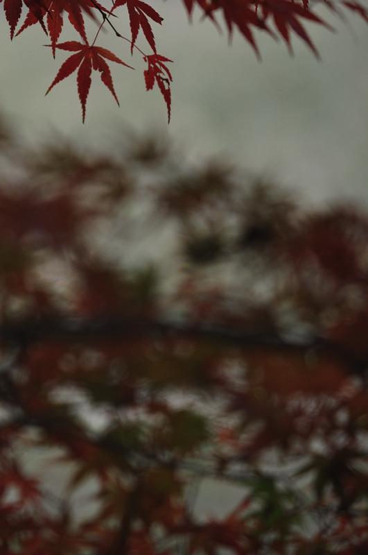 3紅葉2.jpg