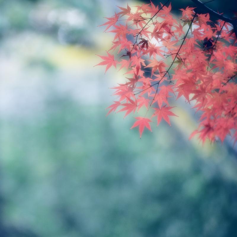 3紅葉1.jpg
