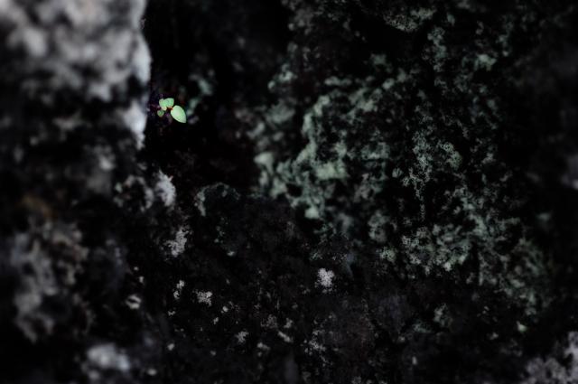0Tiny leaf.jpg